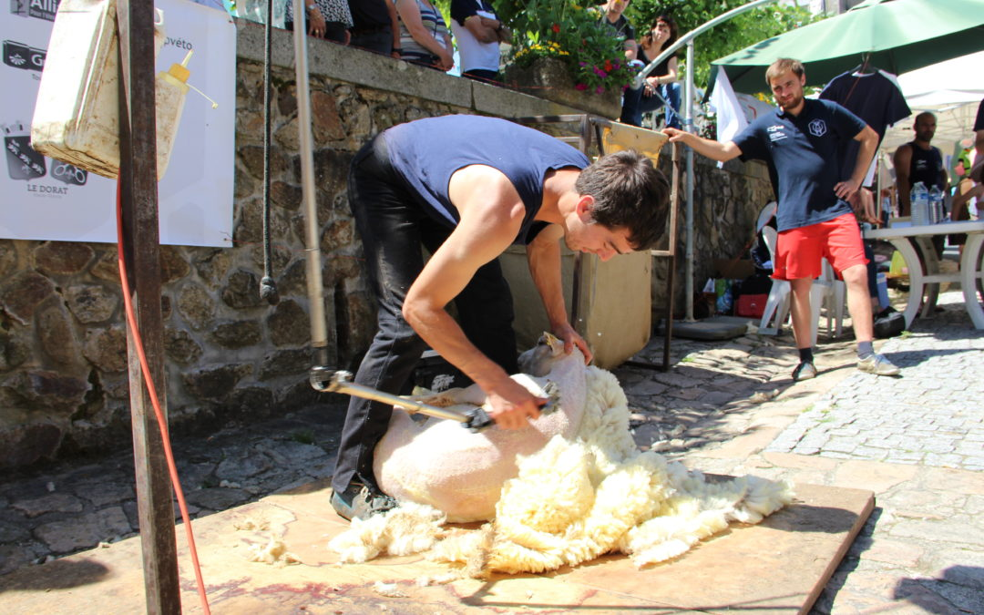 Pour mémoire : Festival de l'Agriculture – Panazol (87)