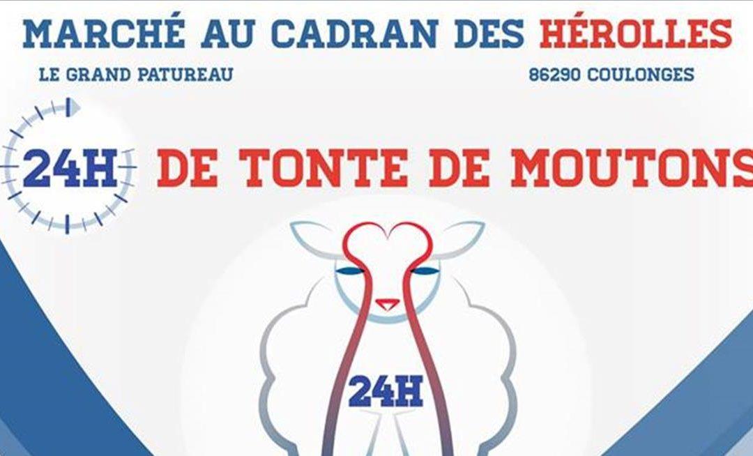 Press invitation – 24-hour Sheep shearing event