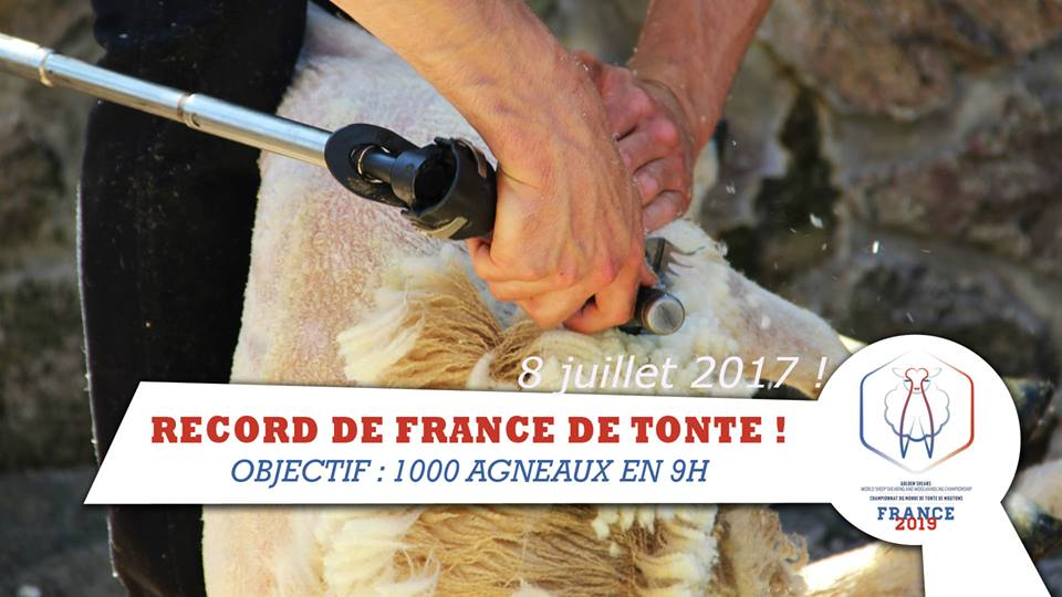 Save the date : Record de France de tonte de moutons à deux tondeurs – Le Pescher, Le Dorat (87)