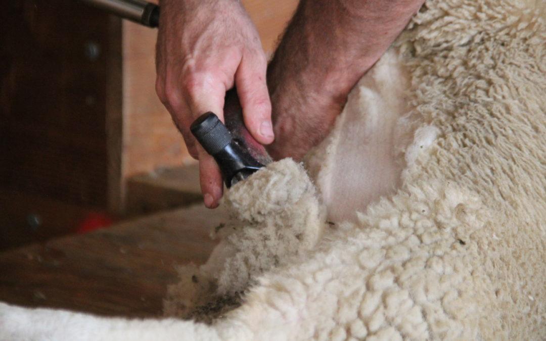 Pour mémoire : Lampeter Shears à Antrim (Pays de Galles)