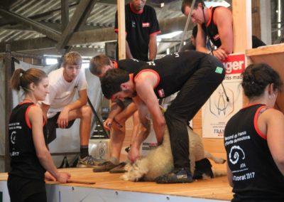 Record de France de tonte de moutons – Le Dorat (08/07/17)
