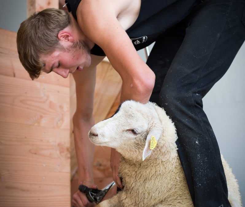 Info presse : Sommet de l'élevage – Cournon d'Auvergne (63)